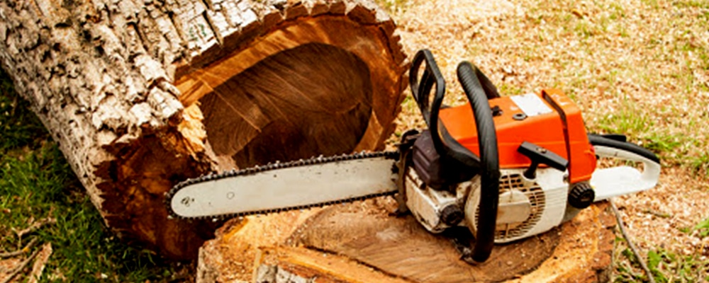 Use the best arborist for tree remmoval