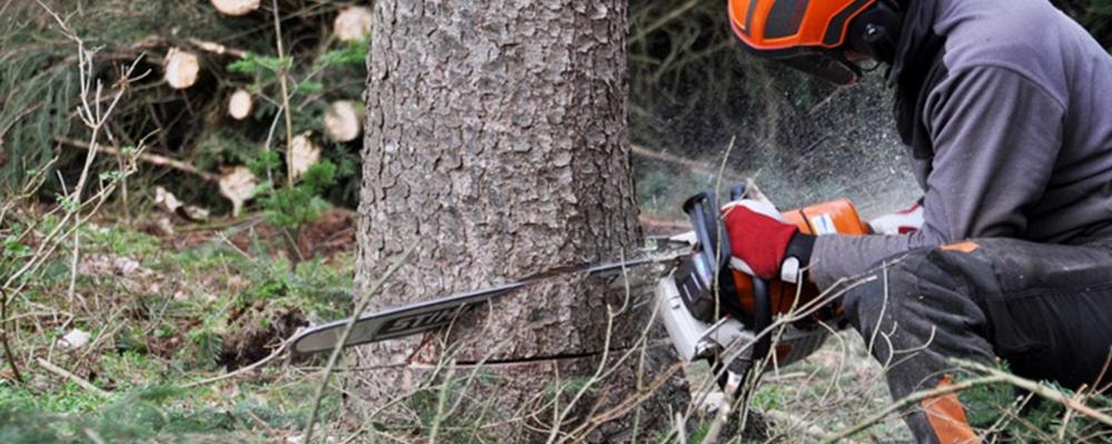 Hire a professional tree service